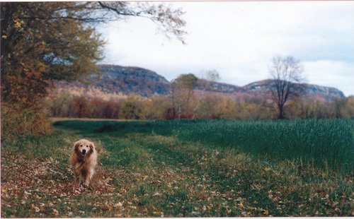 Leia the dog in a fall field