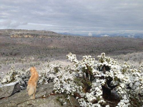 Leia the dog on a snowy cliff