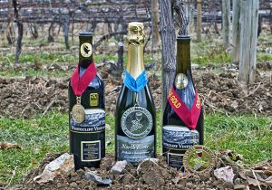 2016 Cabernet Franc, 2013 Cuvee, and 2016 Gamay Noir with the medals they've won in front of vines.