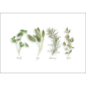 parsley, sage, rosemary, and thyme on a white background.
